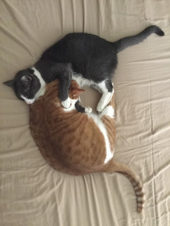 Mark's cats